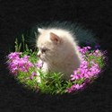 Kitten in Phlox T-Shirt