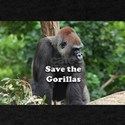 Save the Gorillas T-Shirt
